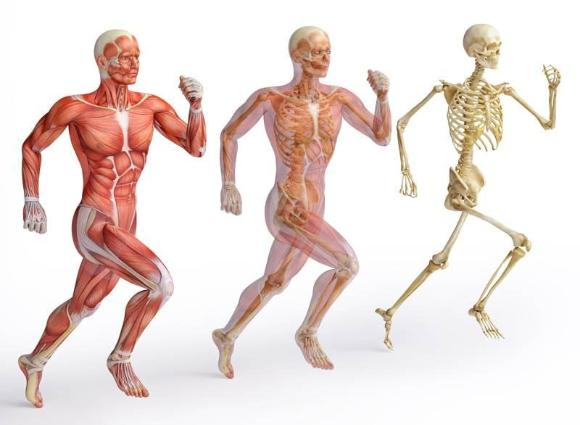 Intoxicação do Organismo e excesso de peso