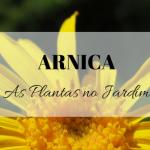 Arnica no Jardim