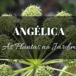 Angélica no Jardim