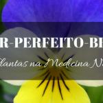 Amor-perfeito-bravo na Medicina Natural