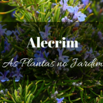 Alecrim no Jardim