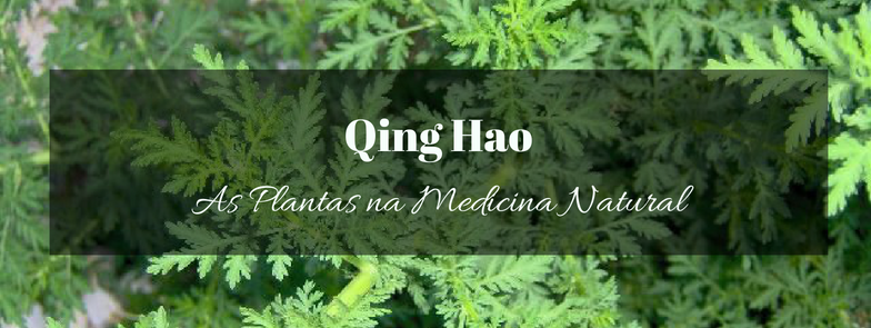qing hao (Artemísia annua)