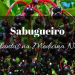 Sabugueiro – Alivia gripes e constipações